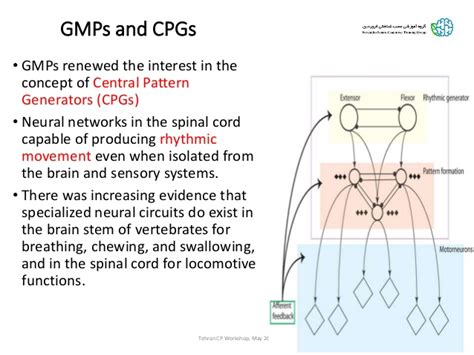 central pattern generator in swallowing neuro developmental treatment ndt