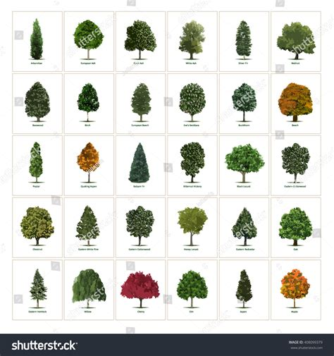 trees types tree kinds 28 images green kids resale tree png 500