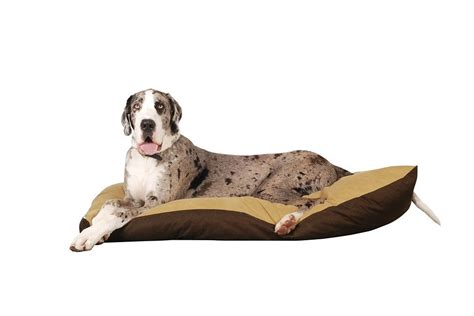 types of dogs and their personalities breeds great dane temperament and personality dogalize