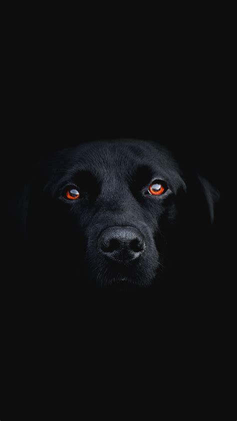 dark dog hd wallpaper   mobile phone