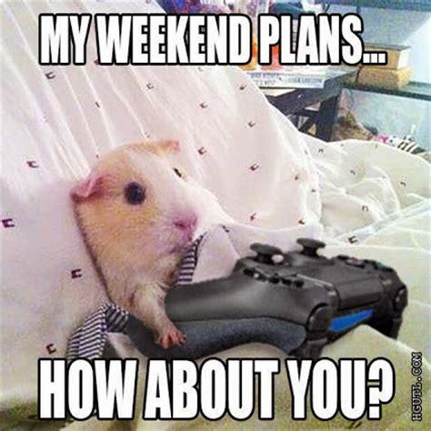 Hamster Bed Startup Weekend Community Google