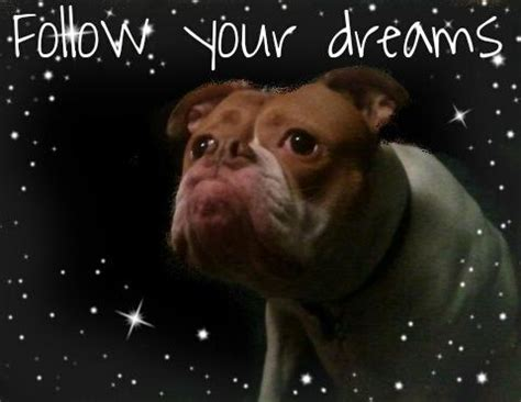 puppy dreams follow your dreams weknowmemes
