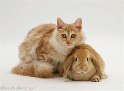 Sho Kucing Dan Harga kucing yang lucu flauschige katzen