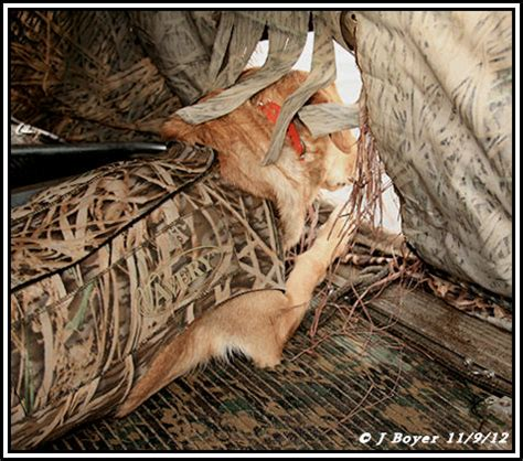 beavertail boat blind 1800 for sale new iowa classifieds page 5 refuge forums