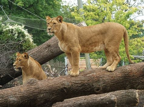 Zoologischer Garten Aquarium öffnungszeiten by Zoopark Erfurt Adresse 214 Ffnungszeiten Eintrittspreise