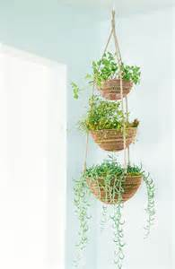indoor hanging plants 25 best ideas about indoor hanging plants on pinterest hanging plants hanging plant and