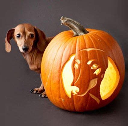 long  short     dachshund dog news