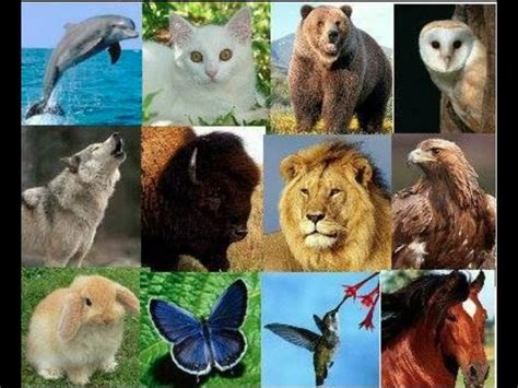 imagenes de animales nativos del peru test de los animales conoce a la fiera que llevas dentro
