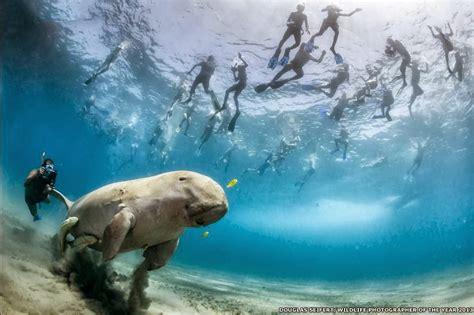 imagenes increibles e insolitas de la naturaleza un mundo en paz incre 237 bles im 225 genes de la naturaleza