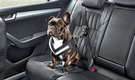puppy seat belt harness seat belt for dogs harness get free image about wiring diagram