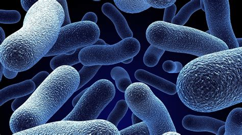 Mba With Biology Background by Bacteria Wallpaper 52 Images
