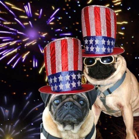 patriotic pug july 4th pugs pugs in costume