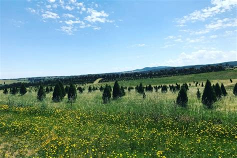 tree farm canberra tree heaven on our doorstep hercanberra au