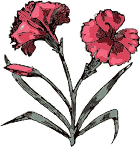 carnation tattoo images clipart best