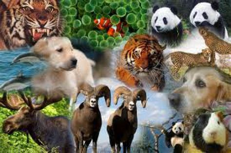 animales animales animales lessons tes teach