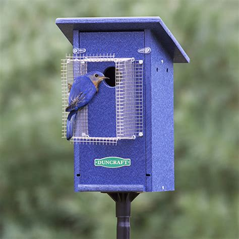 bluebird houses pin bluebird house plans for mountain western and eastern bluebirds on pinterest