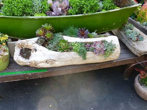 Driftwood Planters For Sale by Driftwood Planter Planted With Succulents Eco Driftwood Planters Driftwood