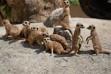 Zoologischer Garten Dresden by Zoo Dresden 187 Zoologischer Garten In Dresden Dresden