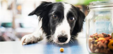 carbs in dogs nutrition tips aspca