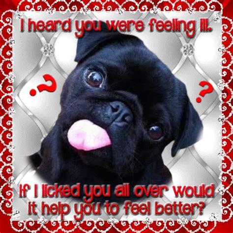 get well soon pug get well soon pug free get well soon ecards greeting cards 123 greetings