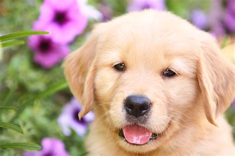 order a puppy is it wrong to buy a puppy the adopt don t shop caign the happy puppy site