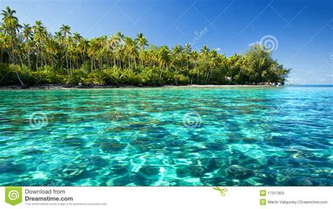 ocean coastal beach coral sculpture tropical underwater coral reef next to tropical island stock photos