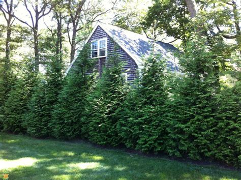 the best trees for privacy on your property water hoop
