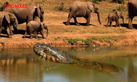 www foto de la pija mas grande y gruesa que hay serpientes gigantes las serpientes mas grandes del mundo