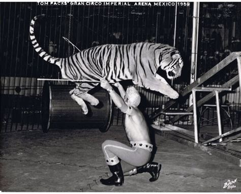 tiger 3 act a 0230475477 222 best circus lights images on dark circus circus art and circus circus