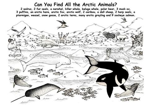 paolo the happy polar books 1000 images about arctic animals on songs for