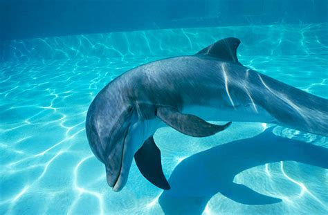 dolphin facts  pictures  kids coolbkids