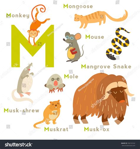 Animals That 8 Letters