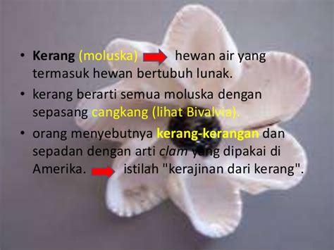 Cangkang Kerang Kepala Kambing keterilan kulit kerang