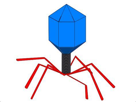 virus clipart virus clip at clker vector clip