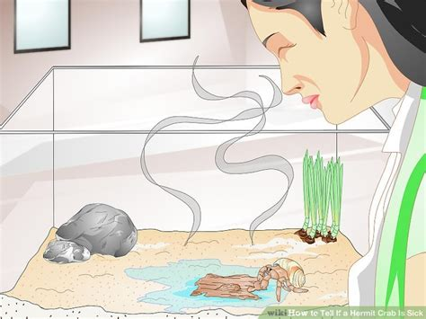 exposure is and shell promptly tell you its skin cancer how to tell if a hermit crab is sick 13 steps with pictures