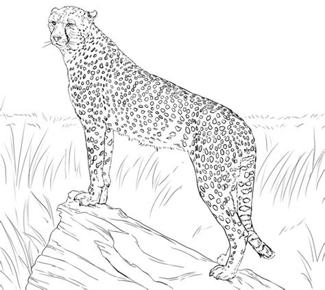 Realistic Cheetah Coloring Pages by Get This Cheetah Coloring Pages Free Yxn4m