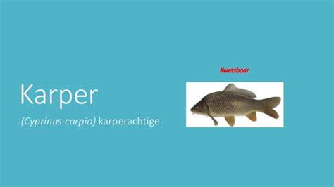 powerpoint layout löschen geht nicht powerpoint spreekbeurt over de karper cyprinus carpio