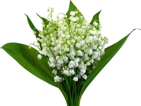 Muguet Fleurs Images by Fonds D Ecran Muguet De Mai Fleurs T 233 L 233 Charger Photo
