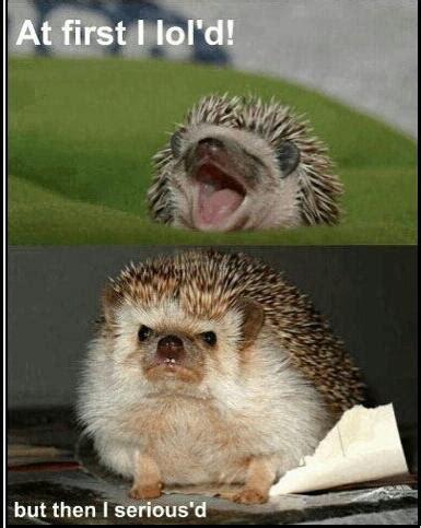 Hedgehog Memes - hedgehog meme by olivegirl23 memedroid
