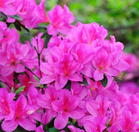 popular spring flowers everything s coming up roses 10 popular spring flowers