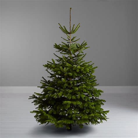 buy john lewis nordmann fir real christmas tree 7 8ft