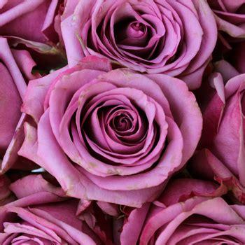 Cool Flower Vases Cool Water Lavender Rose