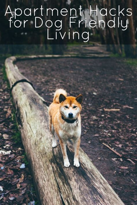 Easy Apartment Dogs 7 Apartment Hacks For Friendly Living Mclife Tucson
