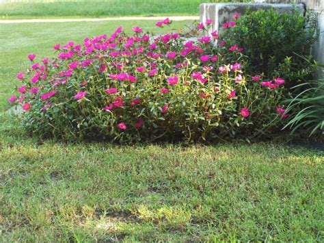 how to keep weeds out of flower beds how to keep weeds out of flower beds bedspreads