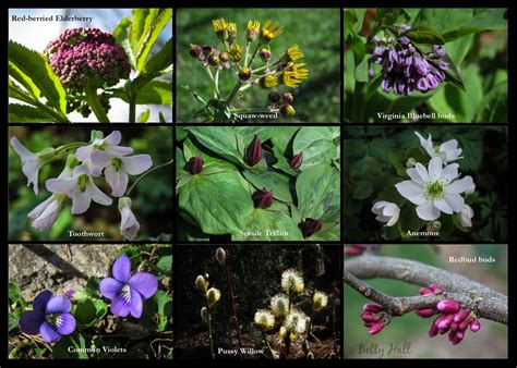 our backyard flowers seasons archives page 2 of 21 betty hall photography