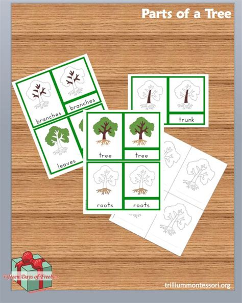 montessori tree printable trees set of and montessori on pinterest