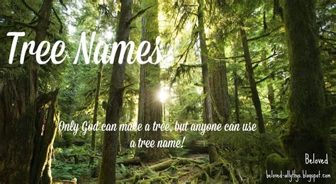 meaning of tree beloved baby names tree names