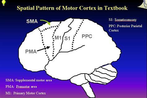 pattern analysis brain curriculum vitae zhishun wang ph d