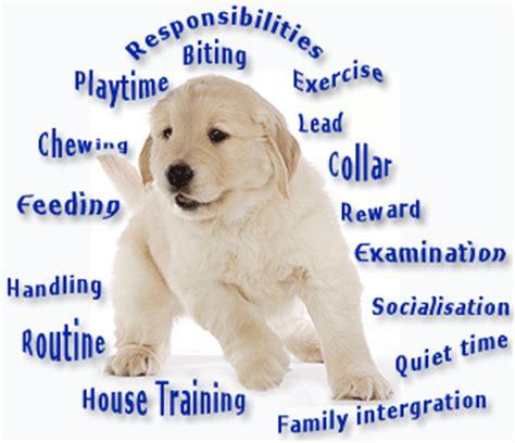 puppy preschool puppy pre school complete obedience
