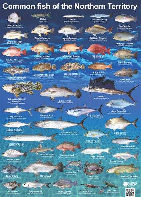 printable fish poster common nt fish nt gov au